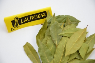 Laurier feuille