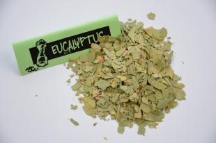 Eucalyptus feuille